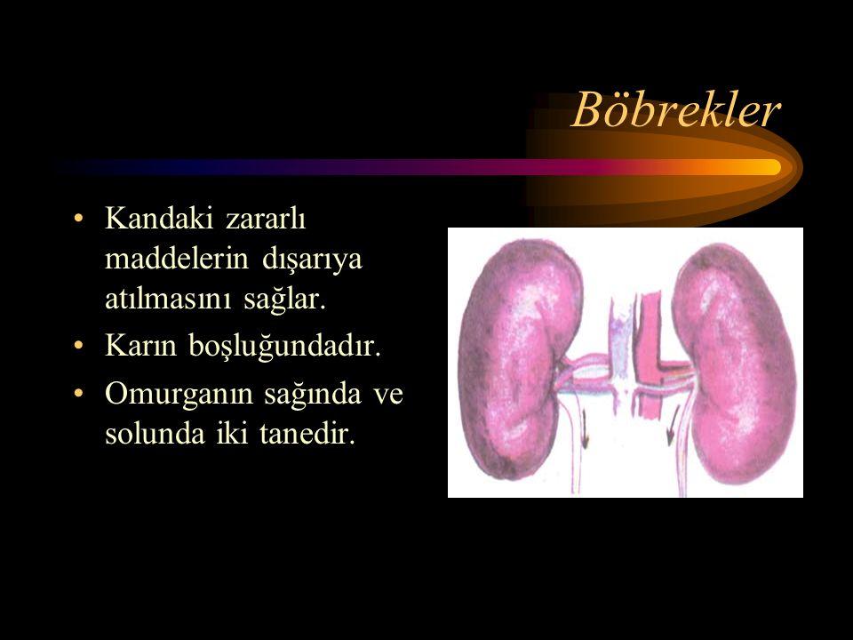Karaciğer Kandaki şeker miktarını düzenler. Karın boşluğumuzun sağ tarafındadır.