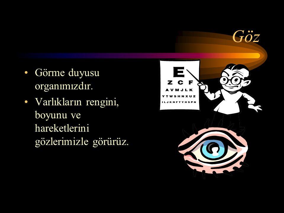 Göz Görme duyusu organımızdır. Varlıkların rengini, boyunu ve hareketlerini gözlerimizle görürüz.