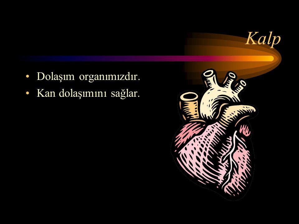 İç Organlarımız Kalp Akciğerler Mide Karaciğer Bağırsaklar Böbrekler