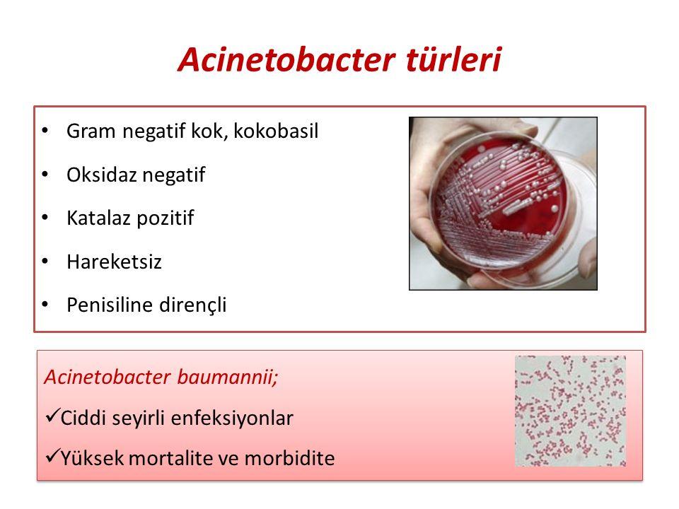 Acinetobacter türleri Gram negatif kok, kokobasil Oksidaz negatif Katalaz pozitif Hareketsiz Penisiline dirençli Acinetobacter baumannii; Ciddi seyirli enfeksiyonlar Yüksek mortalite ve morbidite Acinetobacter baumannii; Ciddi seyirli enfeksiyonlar Yüksek mortalite ve morbidite