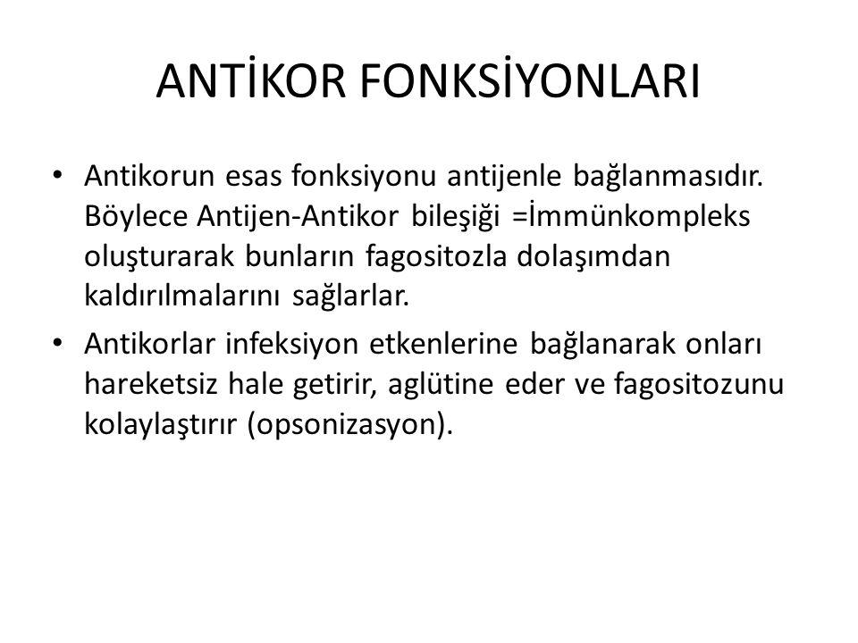 ANTİKOR FONKSİYONLARI Antikorun esas fonksiyonu antijenle bağlanmasıdır.