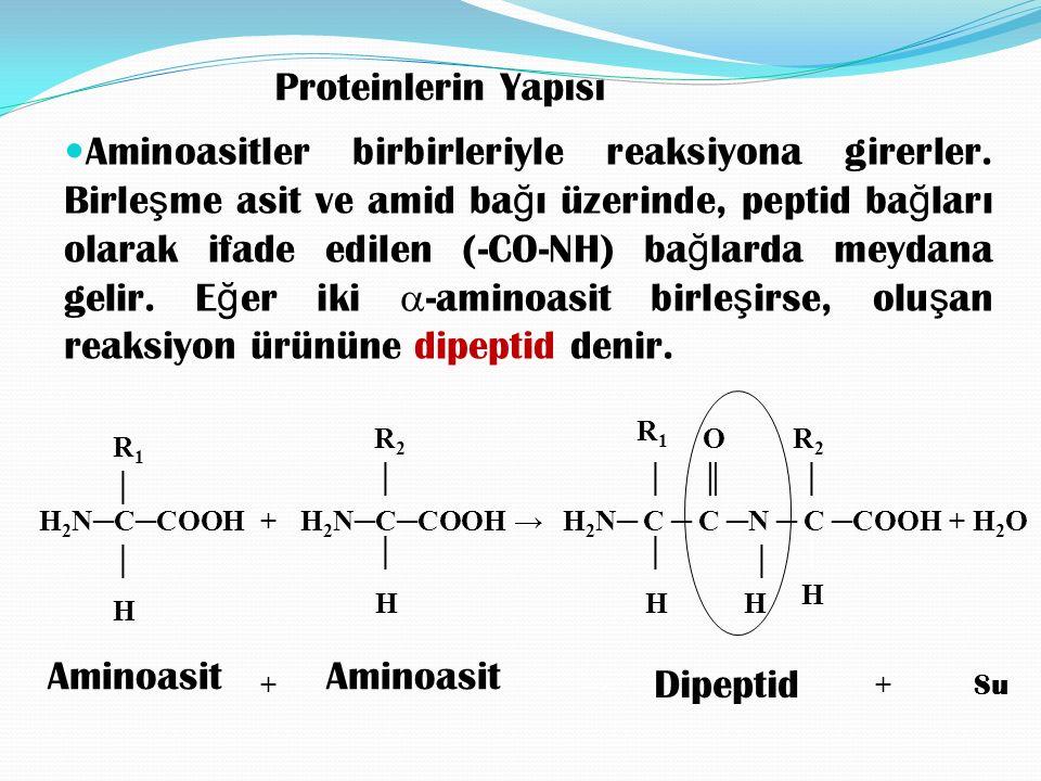 Proteinlerin Yapısı Aminoasitler birbirleriyle reaksiyona girerler.