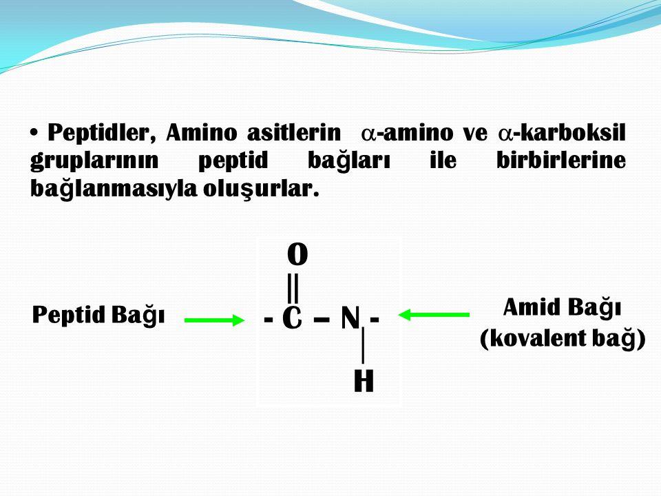 Peptid bağı düzlemi hareketsiz olmasına rağmen,  - karbon etrafındaki dönme polipeptid zincirine esneklik kazandırır.