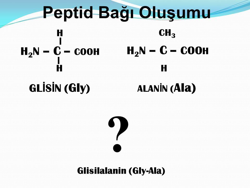 H 2 N – C – COOH H GL İ S İ N ( Gly ) ALAN İ N ( Ala) H 2 N – C – COO H CH 3 Peptid Bağı Oluşumu Glisilalanin (Gly-Ala) HH ?