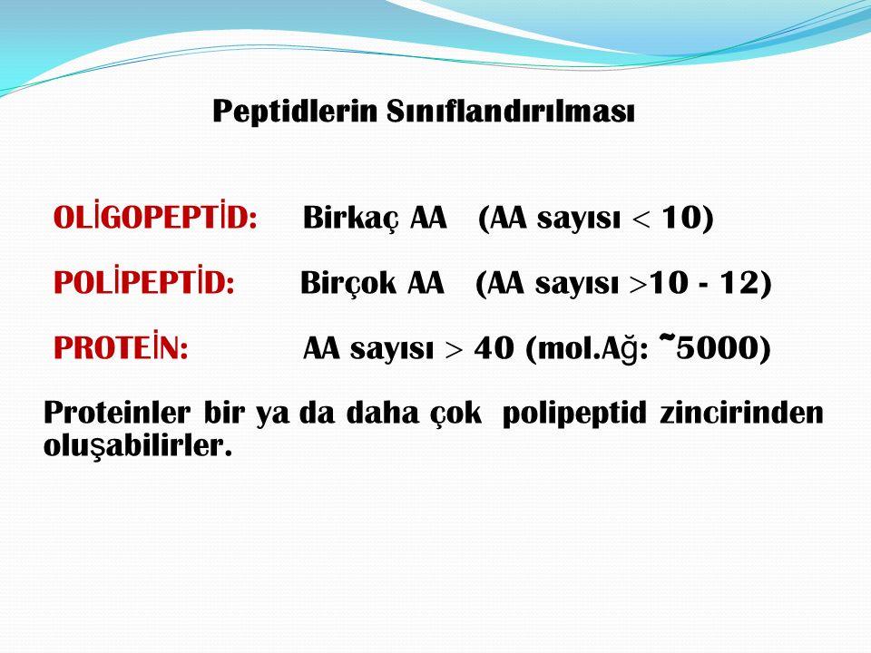 OL İ GOPEPT İ D: Birkaç AA (AA sayısı  10) POL İ PEPT İ D: Birçok AA (AA sayısı  10 - 12) PROTE İ N: AA sayısı  40 (mol.A ğ : ~5000) Proteinler bir ya da daha çok polipeptid zincirinden olu ş abilirler.