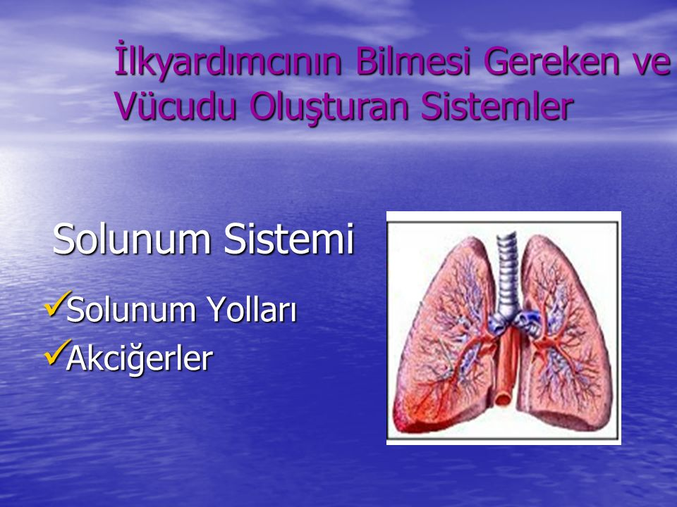 Solunum Sistemi Solunum Yolları Solunum Yolları Akciğerler Akciğerler İlkyardımcının Bilmesi Gereken ve Vücudu Oluşturan Sistemler