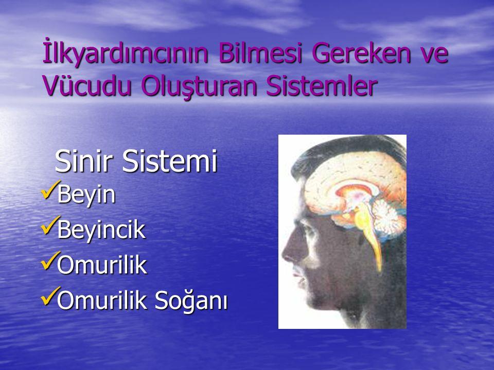 Sinir Sistemi Beyin Beyin Beyincik Beyincik Omurilik Omurilik Omurilik Soğanı Omurilik Soğanı İlkyardımcının Bilmesi Gereken ve Vücudu Oluşturan Siste