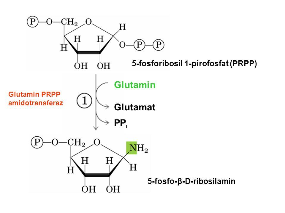 5-fosforibosil 1-pirofosfat (PRPP) 5-fosfo-β-D-ribosilamin Glutamin Glutamat PP i Glutamin PRPP amidotransferaz