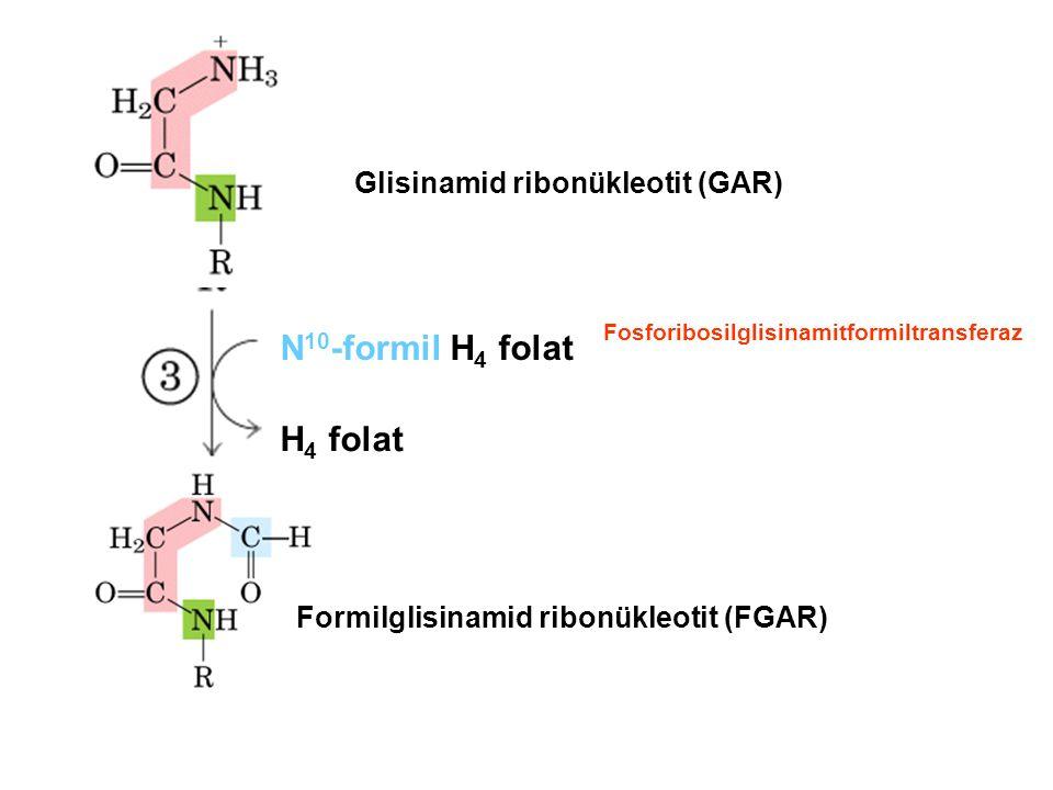 Glisinamid ribonükleotit (GAR) N 10 -formil H 4 folat H 4 folat Formilglisinamid ribonükleotit (FGAR) Fosforibosilglisinamitformiltransferaz
