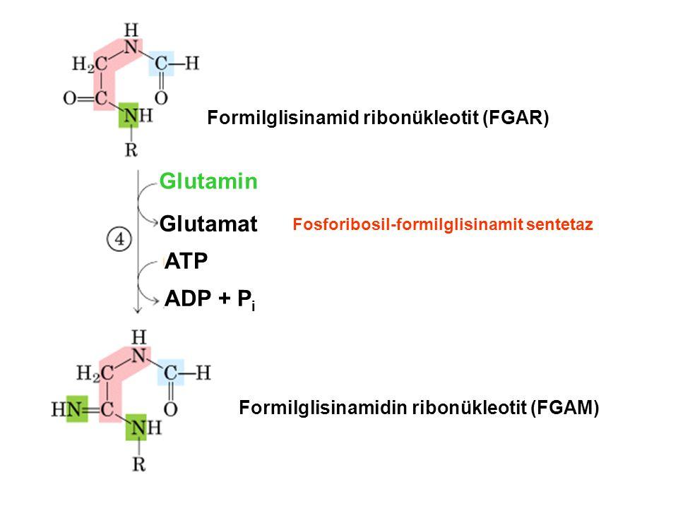 Formilglisinamid ribonükleotit (FGAR) Glutamin Glutamat ATP ADP + P i Formilglisinamidin ribonükleotit (FGAM) Fosforibosil-formilglisinamit sentetaz