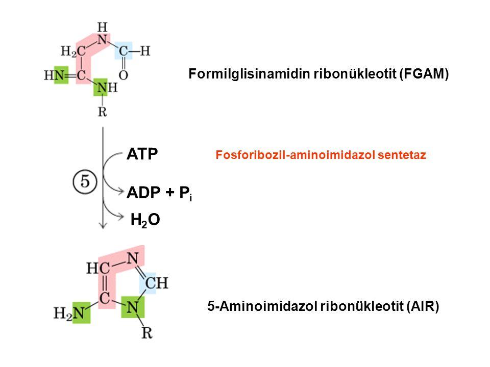 Formilglisinamidin ribonükleotit (FGAM) 5-Aminoimidazol ribonükleotit (AIR) ATP ADP + P i H2OH2O Fosforibozil-aminoimidazol sentetaz