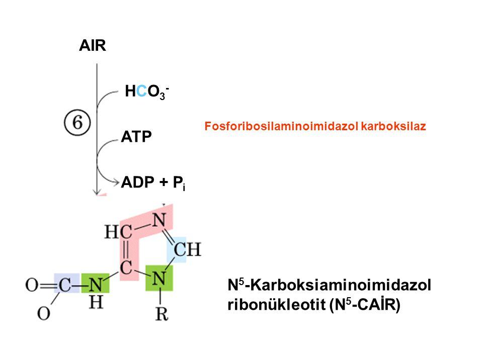AIR HCO3-HCO3- ATP ADP + P i N 5 -Karboksiaminoimidazol ribonükleotit (N 5 -CAİR) Fosforibosilaminoimidazol karboksilaz
