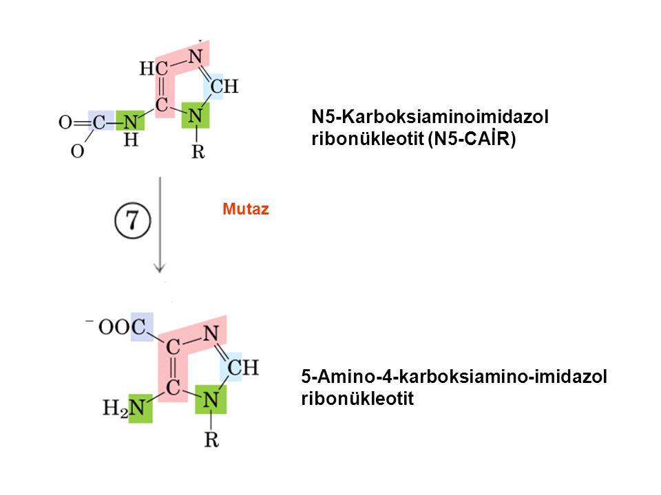 N5-Karboksiaminoimidazol ribonükleotit (N5-CAİR) 5-Amino-4-karboksiamino-imidazol ribonükleotit Mutaz