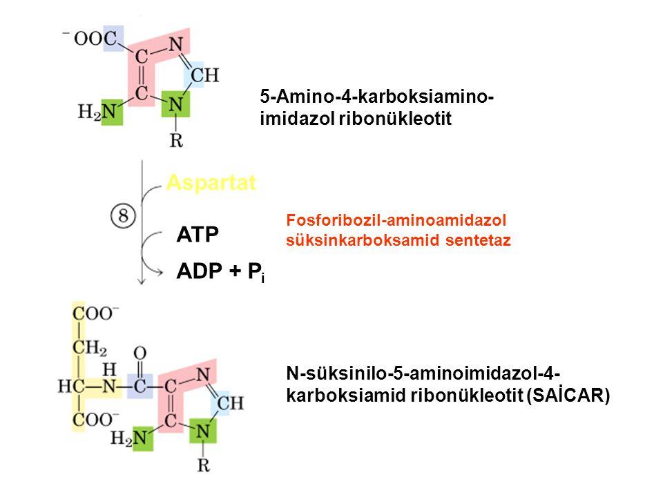 5-Amino-4-karboksiamino- imidazol ribonükleotit Aspartat ATP ADP + P i N-süksinilo-5-aminoimidazol-4- karboksiamid ribonükleotit (SAİCAR) Fosforibozil-aminoamidazol süksinkarboksamid sentetaz