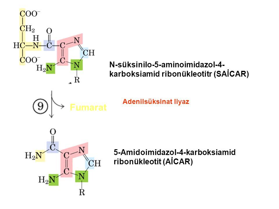 Fumarat N-süksinilo-5-aminoimidazol-4- karboksiamid ribonükleotitr (SAİCAR) 5-Amidoimidazol-4-karboksiamid ribonükleotit (AİCAR) Adenilsüksinat liyaz