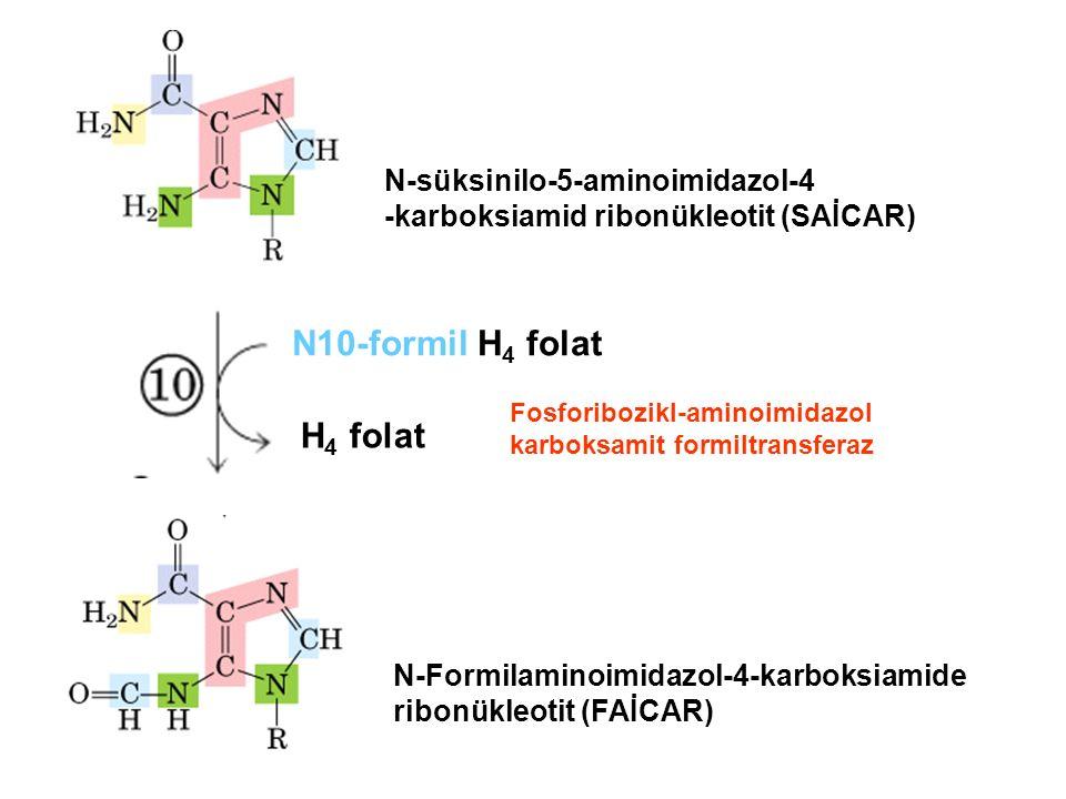 N-süksinilo-5-aminoimidazol-4 -karboksiamid ribonükleotit (SAİCAR) N10-formil H 4 folat H 4 folat N-Formilaminoimidazol-4-karboksiamide ribonükleotit (FAİCAR) Fosforibozikl-aminoimidazol karboksamit formiltransferaz