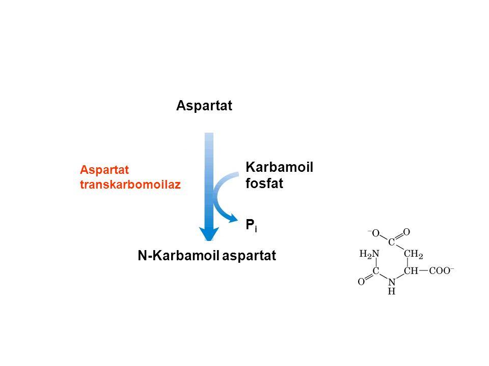 N-Karbamoil aspartat Aspartat Karbamoil fosfat PiPi Aspartat transkarbomoilaz