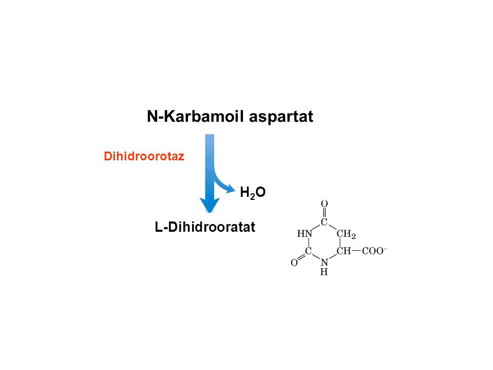 N-Karbamoil aspartat L-Dihidrooratat Dihidroorotaz H2OH2O