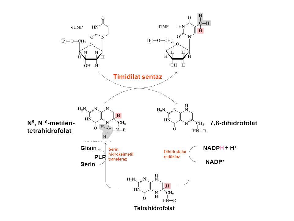 N 5, N 10 -metilen- tetrahidrofolat 7,8-dihidrofolat Glisin Serin PLP Serin hidroksimetil transferaz Tetrahidrofolat Dihidrofolat redüktaz NADPH + H + NADP +