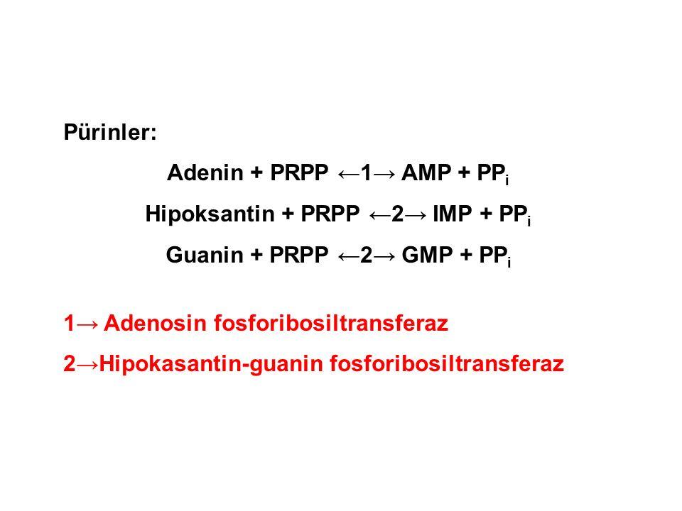 Pürinler: Adenin + PRPP ←1→ AMP + PP i Hipoksantin + PRPP ←2→ IMP + PP i Guanin + PRPP ←2→ GMP + PP i 1→ Adenosin fosforibosiltransferaz 2→Hipokasantin-guanin fosforibosiltransferaz