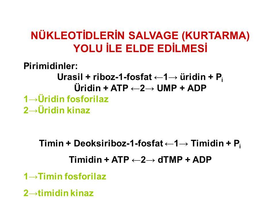 Pirimidinler: Urasil + riboz-1-fosfat ←1→ üridin + P i Üridin + ATP ←2→ UMP + ADP 1→Üridin fosforilaz 2→Üridin kinaz Timin + Deoksiriboz-1-fosfat ←1→ Timidin + P i Timidin + ATP ←2→ dTMP + ADP 1→Timin fosforilaz 2→timidin kinaz