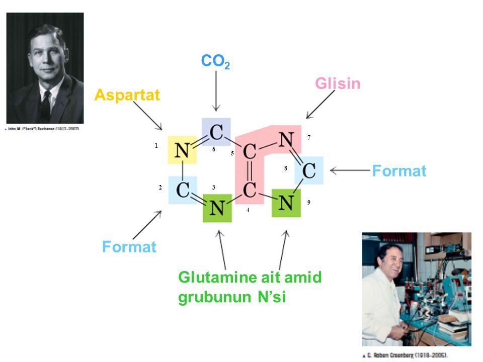 CO 2 Format Aspartat Glisin Glutamine ait amid grubunun N'si 1 23 4 5 6 7 8 9