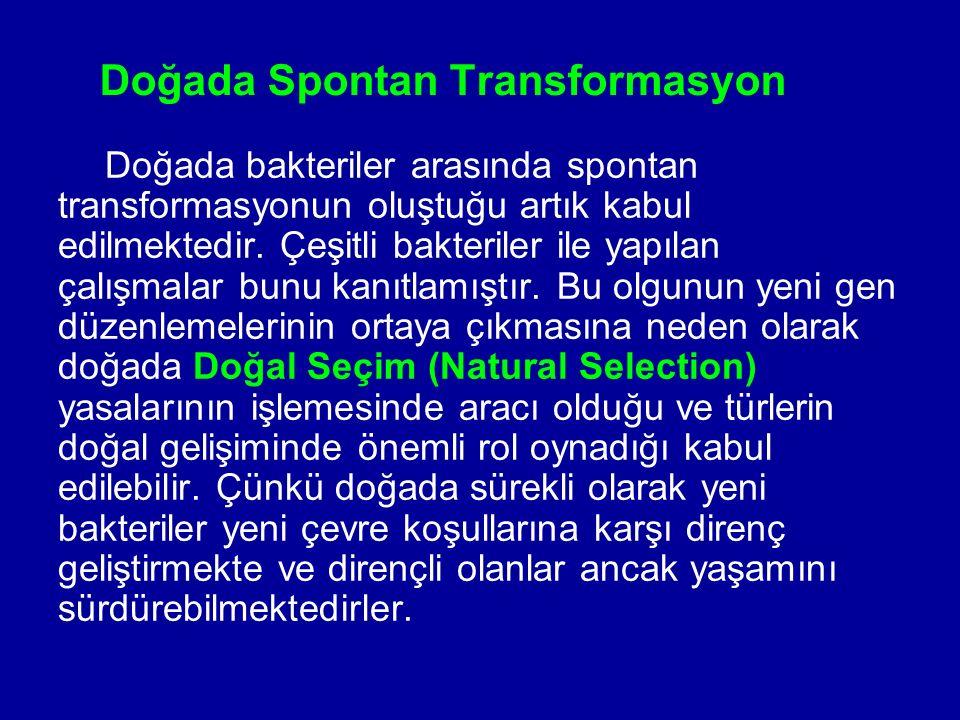 Doğada Spontan Transformasyon Doğada bakteriler arasında spontan transformasyonun oluştuğu artık kabul edilmektedir. Çeşitli bakteriler ile yapılan ça