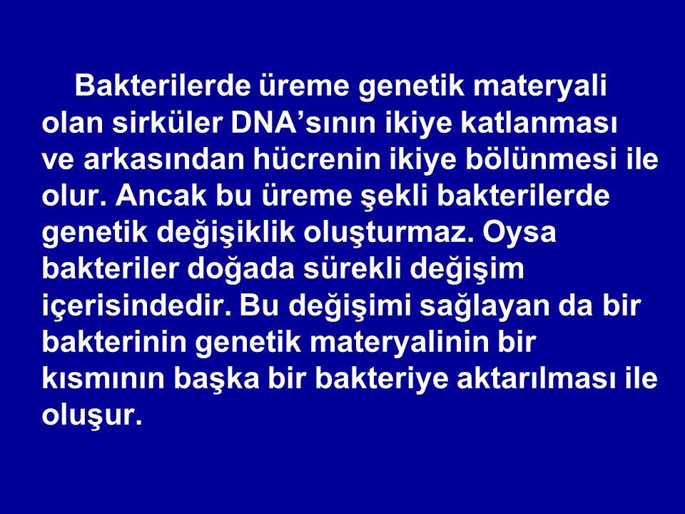Bakterilerde üreme genetik materyali olan sirküler DNA'sının ikiye katlanması ve arkasından hücrenin ikiye bölünmesi ile olur. Ancak bu üreme şekli ba