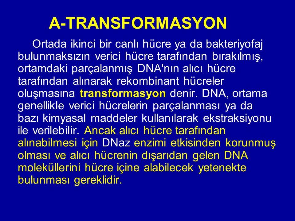 A-TRANSFORMASYON Ortada ikinci bir canlı hücre ya da bakteriyofaj bulunmaksızın verici hücre tarafından bırakılmış, ortamdaki parçalanmış DNA'nın alıc