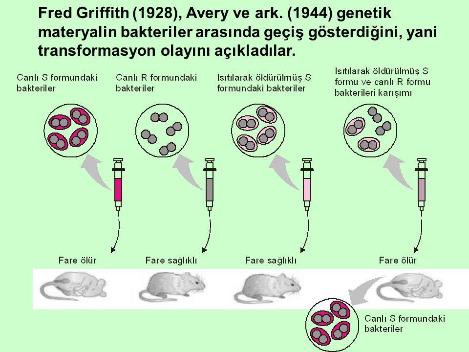 Griffith'in çalışmalarından elde edilen sonuçlar: 1.Saflaştırılmış transformasyon yapan faktörün beklenildiği gibi kimyasal yapıda olduğu, 2.Elde edilen materyalin genel özelliklerinin DNA'ya benzediği, 3.Protein veya lipidlerin ortamdan uzaklaştırılması sonrası transformasyon yapma aktivitesinde bir kayıp olmadığı, 4.Tripsin ve kimotripsin gibi polipeptid kıran (protein parçalayan) enzimlerin transformasyon yapan aktiviteyi etkilemediği, 5.RNaz'ın transformasyon üzerine etkisinin olmadığı, 6.Ortama DNaz ilavesi ile transformasyon tamamen ortadan kalktığını belirlemişlerdir.