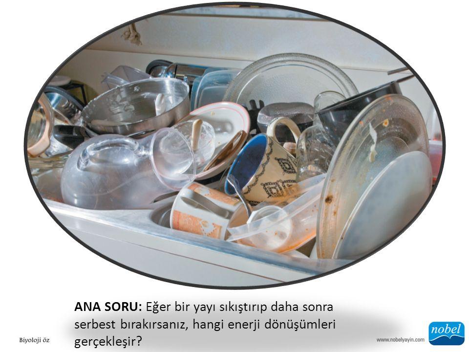 ANA SORU: Eğer bir yayı sıkıştırıp daha sonra serbest bırakırsanız, hangi enerji dönüşümleri gerçekleşir?