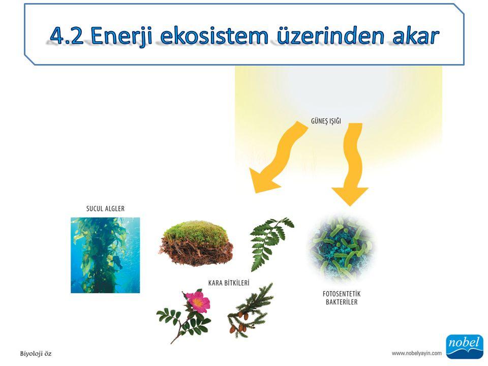 ANA SORU: Bu konudaki yanlış ifade nedir: Bitkiler fotosentez gerçekleştirirler, fakat sadece hayvanlar hücresel solunum gerçekleştirirler.