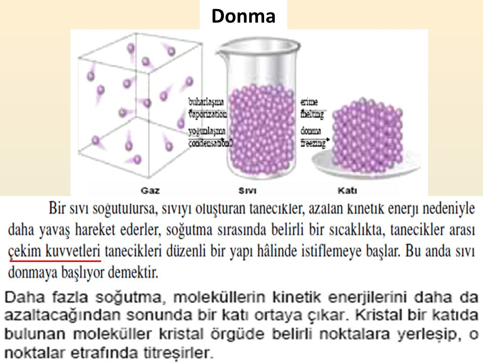 Donma 11
