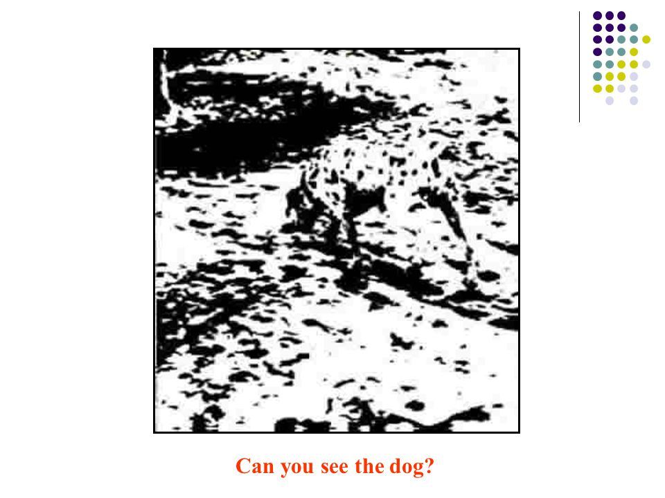 Can you see the dog?