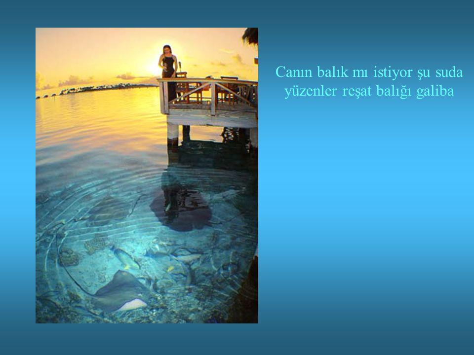 Canın balık mı istiyor şu suda yüzenler reşat balığı galiba