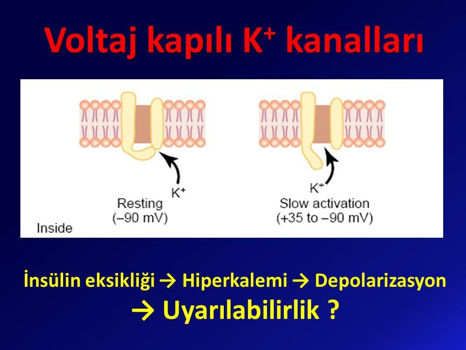 Voltaj kapılı K + kanalları İnsülin eksikliği → Hiperkalemi → Depolarizasyon → Uyarılabilirlik ?