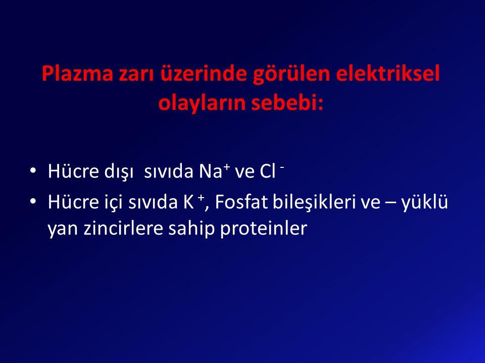 Plazma zarı üzerinde görülen elektriksel olayların sebebi: Hücre dışı sıvıda Na + ve Cl - Hücre içi sıvıda K +, Fosfat bileşikleri ve – yüklü yan zinc