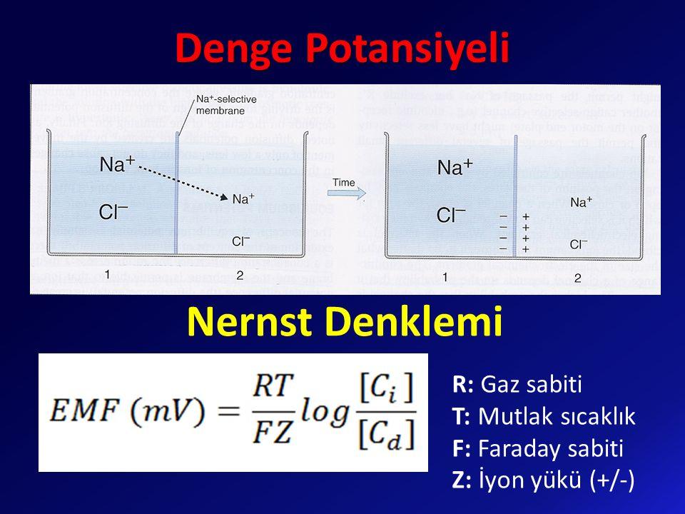 Nernst Denklemi Denge Potansiyeli R: Gaz sabiti T: Mutlak sıcaklık F: Faraday sabiti Z: İyon yükü (+/-)