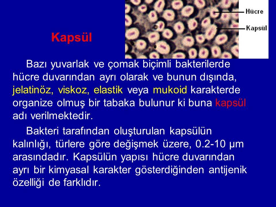 Kapsül Bazı yuvarlak ve çomak biçimli bakterilerde hücre duvarından ayrı olarak ve bunun dışında, jelatinöz, viskoz, elastik veya mukoid karakterde organize olmuş bir tabaka bulunur ki buna kapsül adı verilmektedir.