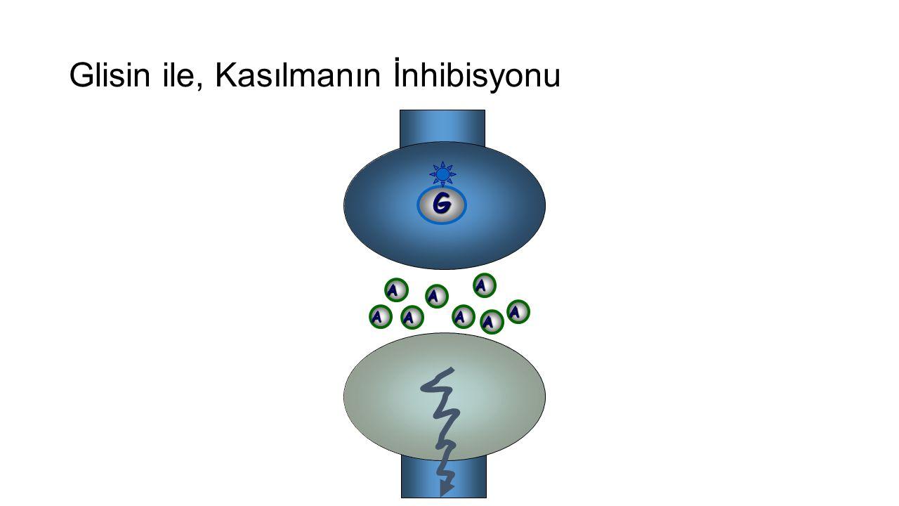 Glisin ile, Kasılmanın İnhibisyonu G A A A A A A A A