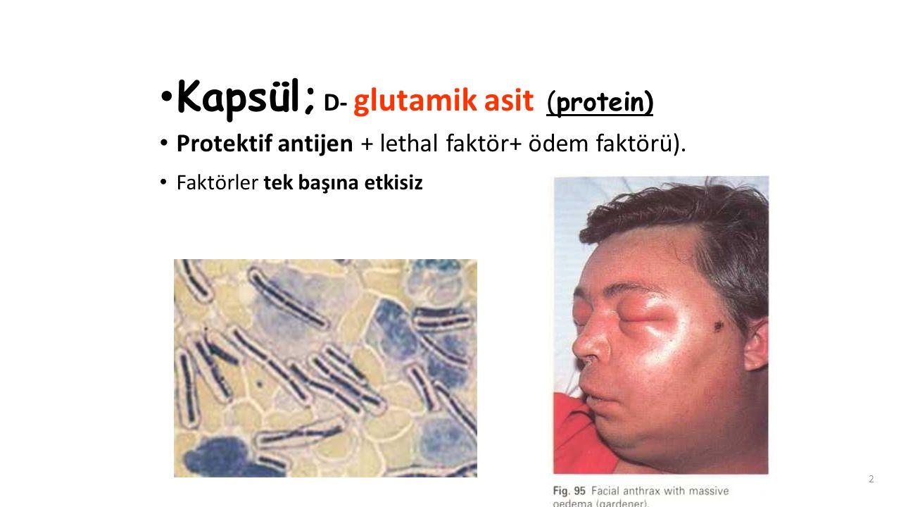 2 Kapsül; D- glutamik asit (protein) Protektif antijen + lethal faktör+ ödem faktörü). Faktörler tek başına etkisiz