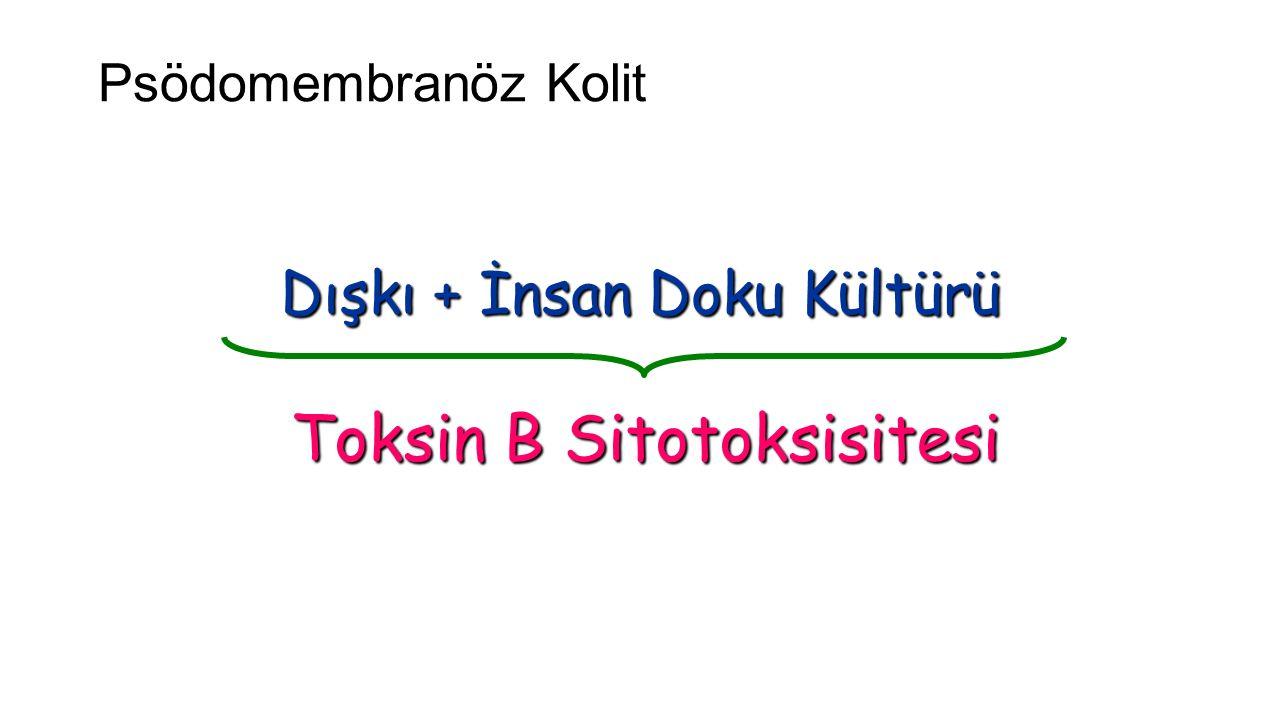 Psödomembranöz Kolit (C.difficile) Dışkı + İnsan Doku Kültürü Toksin B Sitotoksisitesi