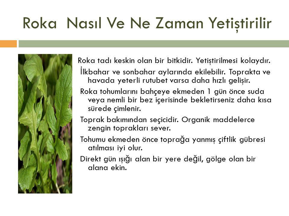 Roka Nasıl Ve Ne Zaman Yetiştirilir Roka tadı keskin olan bir bitkidir.