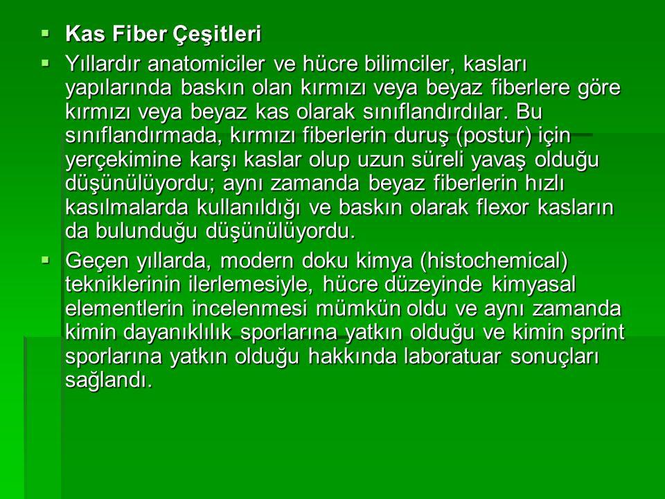  Araştırmacılar, yeni laboratuar teknikleriyle 2-8 arasında değişik fiber çeşidi buldular.