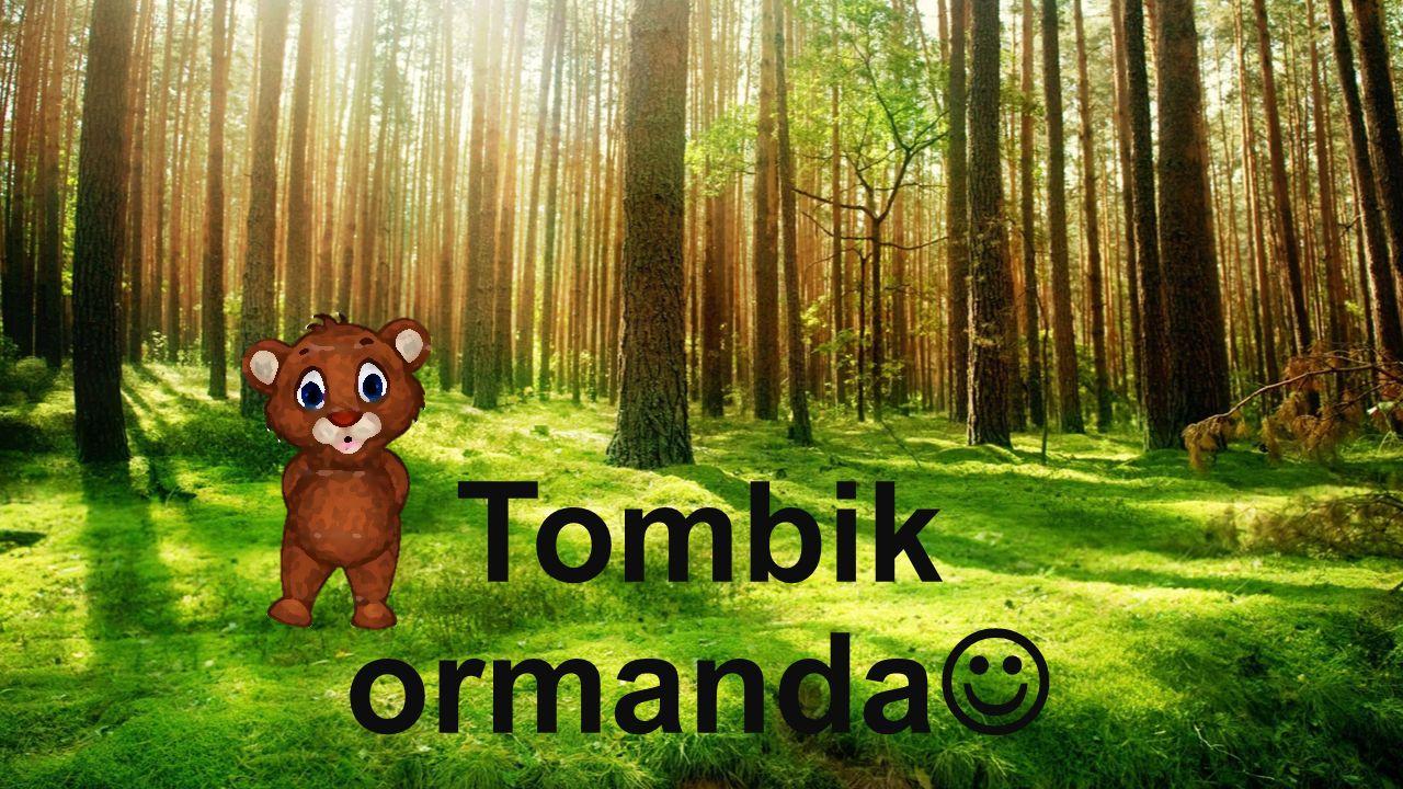 Tombik ormanda