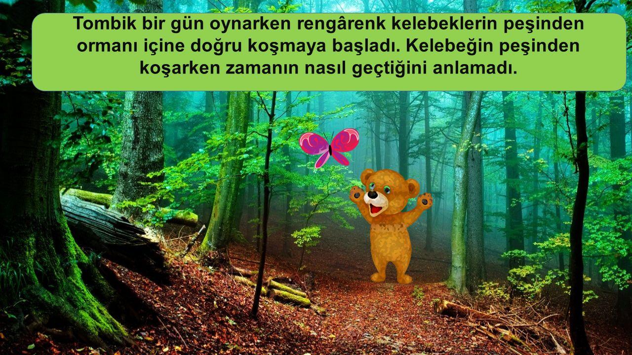 Tombik bir gün oynarken rengârenk kelebeklerin peşinden ormanı içine doğru koşmaya başladı.