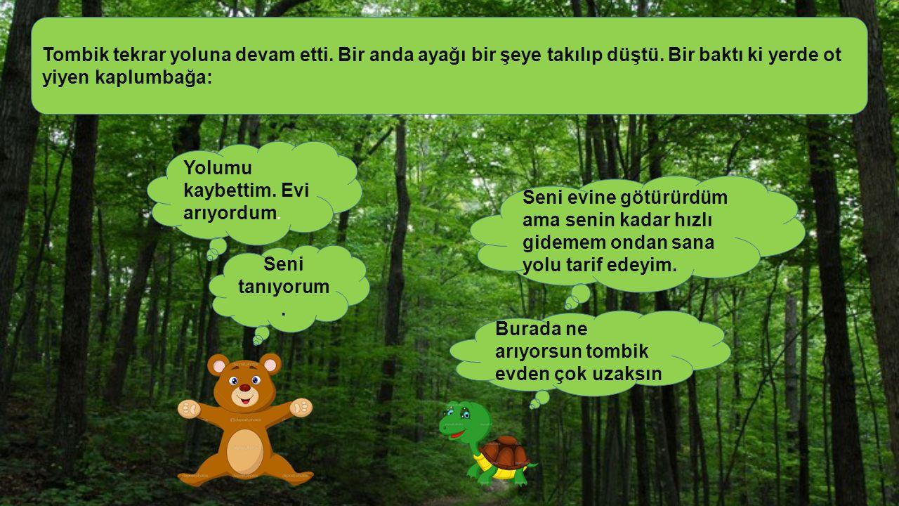 Tombik yoluna devam etti ve karşısına maymun çıktı. Şaşkınlıkla maymuna baktı. Ağaçta asılı muz yiyordu. Ne o hiç maymun görmedin mi? Dedi ve uzaklaşt