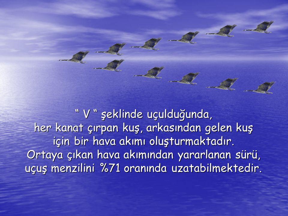 V şeklinde uçulduğunda, her kanat çırpan kuş, arkasından gelen kuş için bir hava akımı oluşturmaktadır.