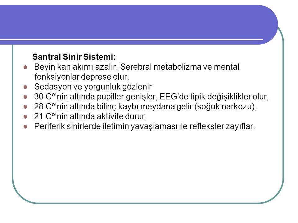 Santral Sinir Sistemi: Beyin kan akımı azalır.