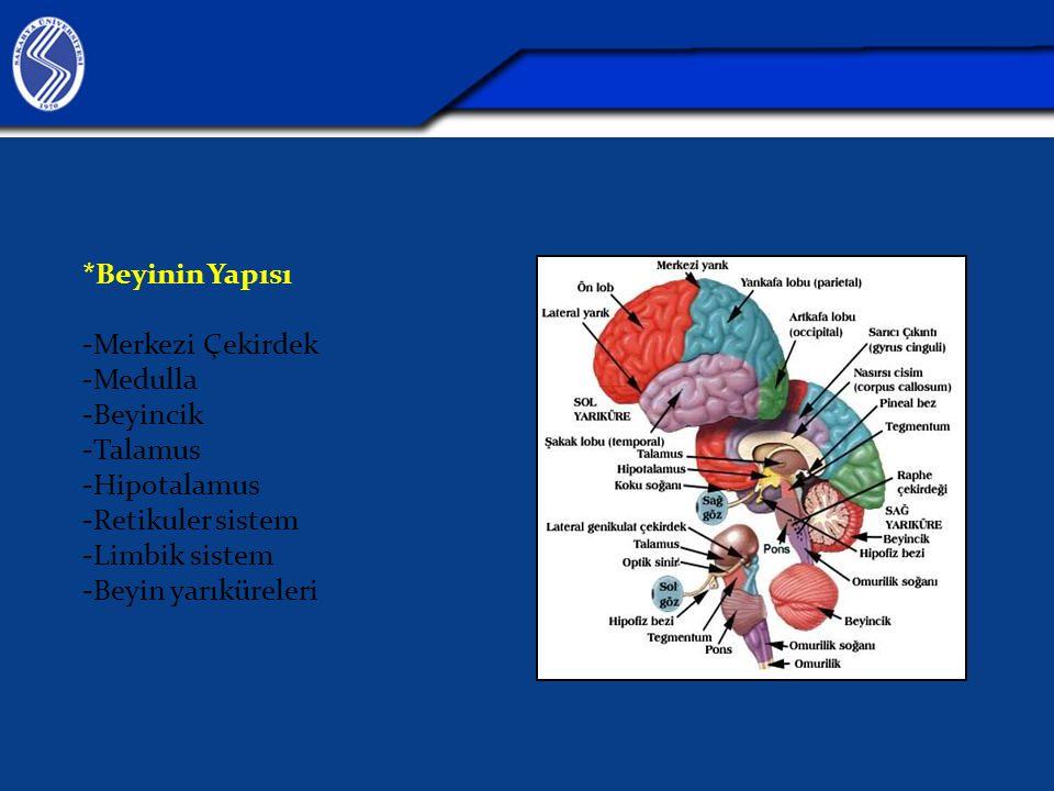 *Beyinin Yapısı -Merkezi Çekirdek -Medulla -Beyincik -Talamus -Hipotalamus -Retikuler sistem -Limbik sistem -Beyin yarıküreleri